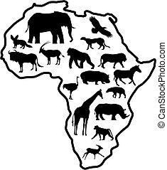 África animal