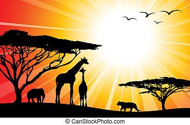 /, áfrica, siluetas, -, safari