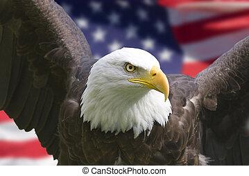 águila, bandera estadounidense