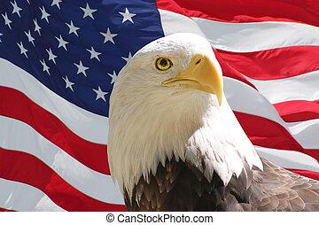 águila calva y bandera americana
