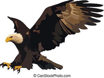 águila, landing.
