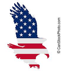 águila, norteamericano, negrita