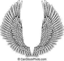 Águila o alas de ángel
