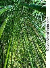 Ángulo de bambú