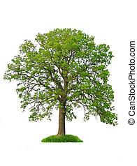 Árbol aislado