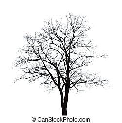árbol, aislado, fondo., forma, descubierto, blanco