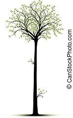 Árbol alto