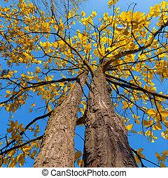 Árbol con hojas amarillas