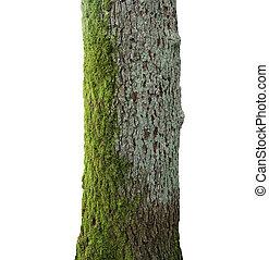 Árbol con musgo verde