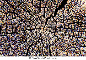 árbol, cracks., hermoso, corte, anual, anillos