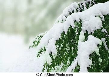 Árbol cubierto de nieve