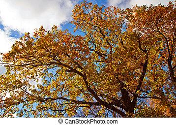 Árbol de otoño contra el cielo