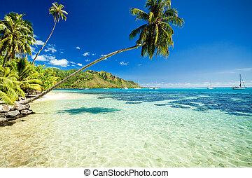 Árbol de palmera colgando sobre la asombrosa laguna