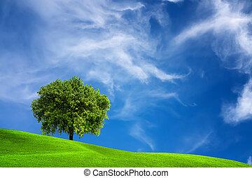 Árbol de roble en la naturaleza