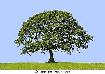 Árbol de roble, símbolo de fuerza