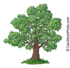 Árbol de roble y hierba verde
