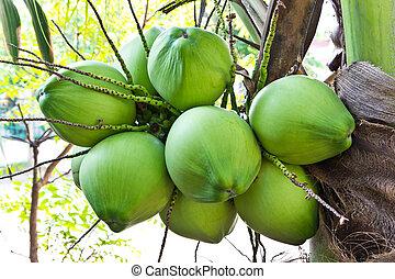 árbol del coco