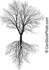 Árbol desnudo con raíces