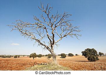 árbol desnudo