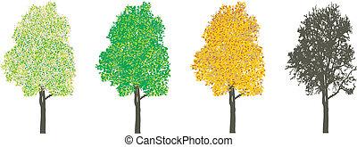 Árbol en cuatro estaciones