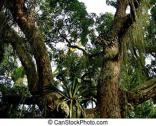 Árbol en la selva amazónica
