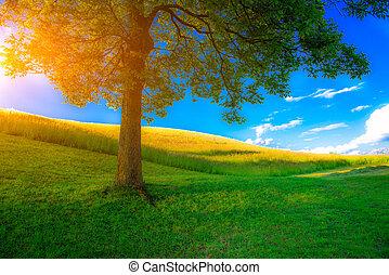 Árbol en un prado de primavera