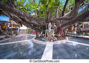 Árbol enorme en el templo Wat Phara Yai, koh Samui, thailand