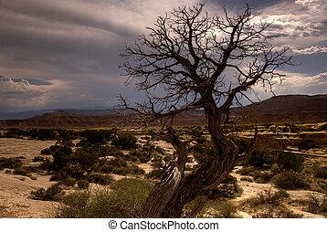 árbol estéril, sudoeste