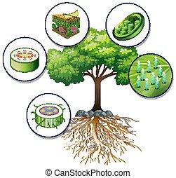 árbol grande, células, planta, verde, cierre