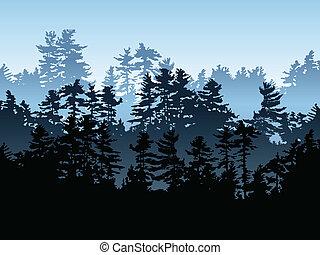 árbol hoja perenne, bosque