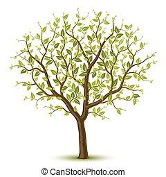 árbol, leafage, verde