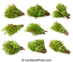 árbol, neem, blanco, aislado, nim, margosa, fondo., siamés