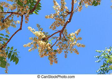 Árbol Neem, flor neem, un sabor amargo