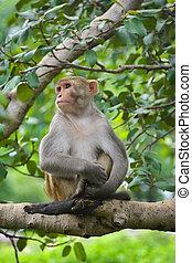 árbol, parque, mono