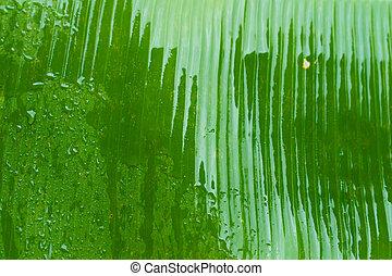 árbol, plátano, gotas de lluvia, jardín, lluvia, hoja verde, después