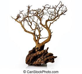 Árbol seco