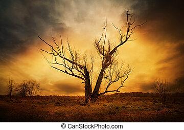 Árbol seco y cuervos en las ramas