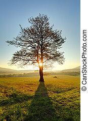Árbol solitario en la pradera al atardecer con sol y niebla - panorama