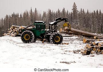 árbol spruce, skidder, transportación