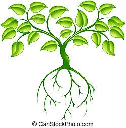 Árbol verde y raíces