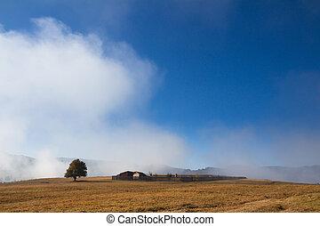 Árbol y pequeña granja en la niebla