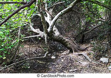 Árboles, arbustos con agua