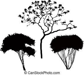 Árboles arbustos