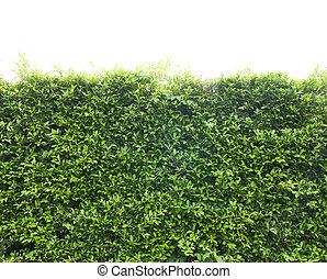 Árboles arbustos hojas verdes