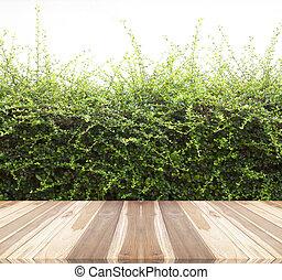 Árboles arbustos naturales