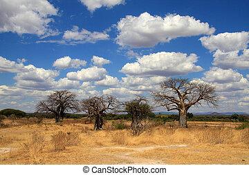 Árboles Baobab en Savanna
