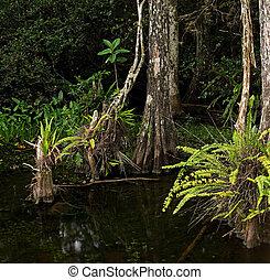 Árboles cipreses y helechos en pantanosas Florida Everglades