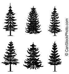 árboles, colección, pino