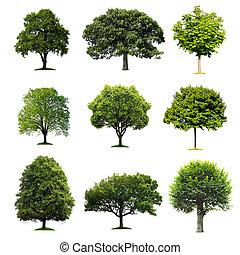 árboles, colección