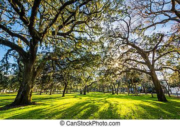 Árboles con musgo español, en el parque forsyth, en Savannah, Georgia.